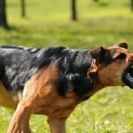 Training Methods to Make a Guard or Pet Dog Aggressive